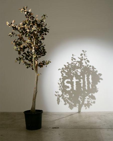 5_Shadow Art
