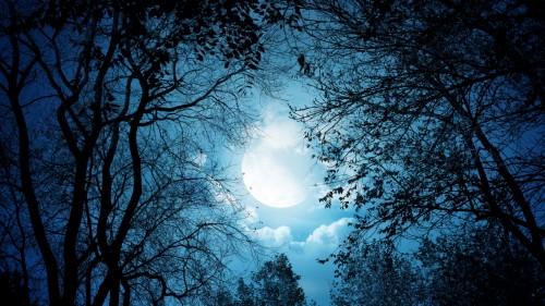 3_White Autumn Night