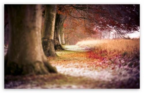 5_Forest Wallpaper