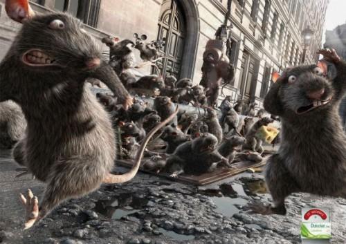 11_Dulcolax - Rats