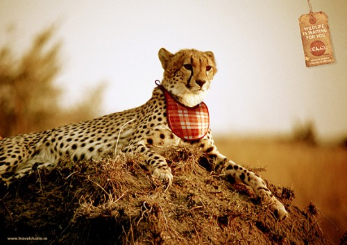 39_Leopard is Waiting for You