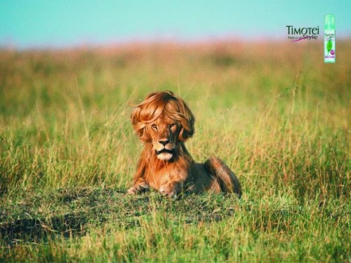 48_Timotei Styling Mousse - Lion