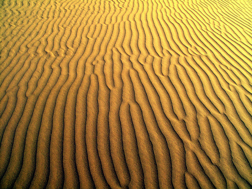 12_Thar Desert
