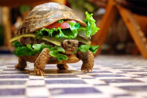 Turtle Sandwich