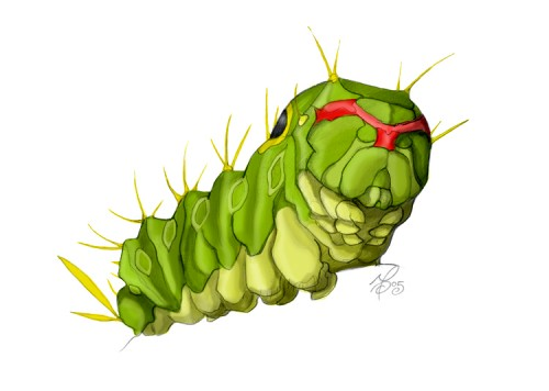 59_Caterpie