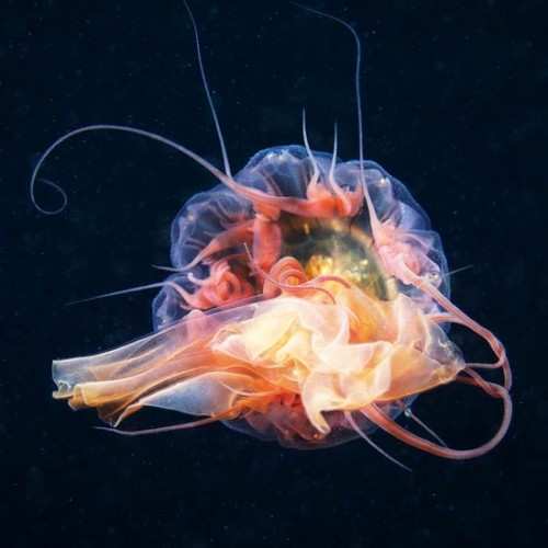 Cool Jellyfish Photography